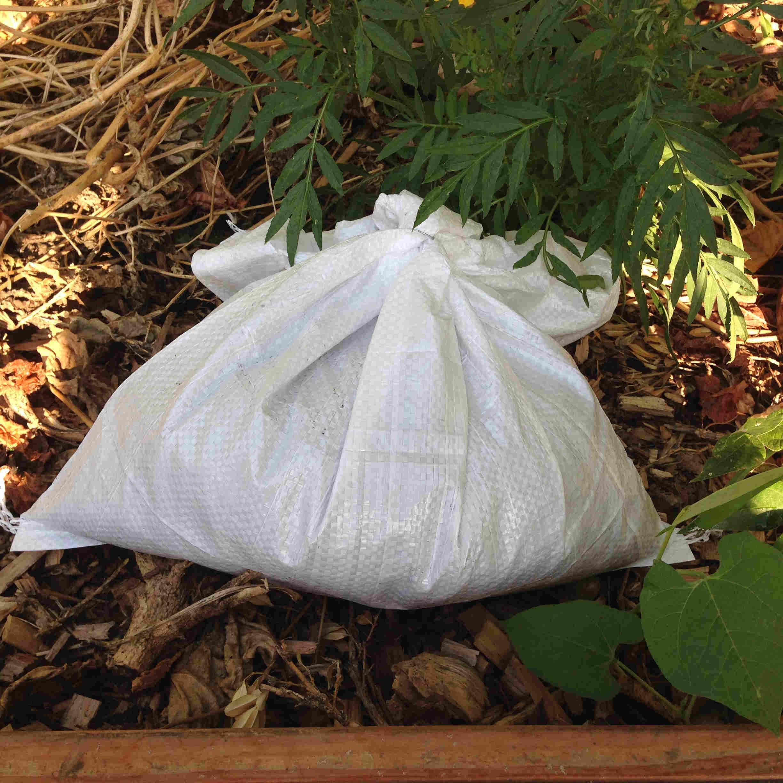 Achat de vers de compost Eisenia fetida
