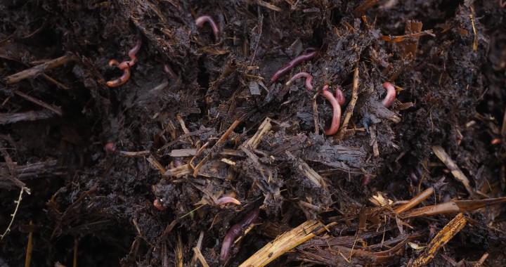 La lombriculture permet d'élever des vers de terre et de produire du lombricompost